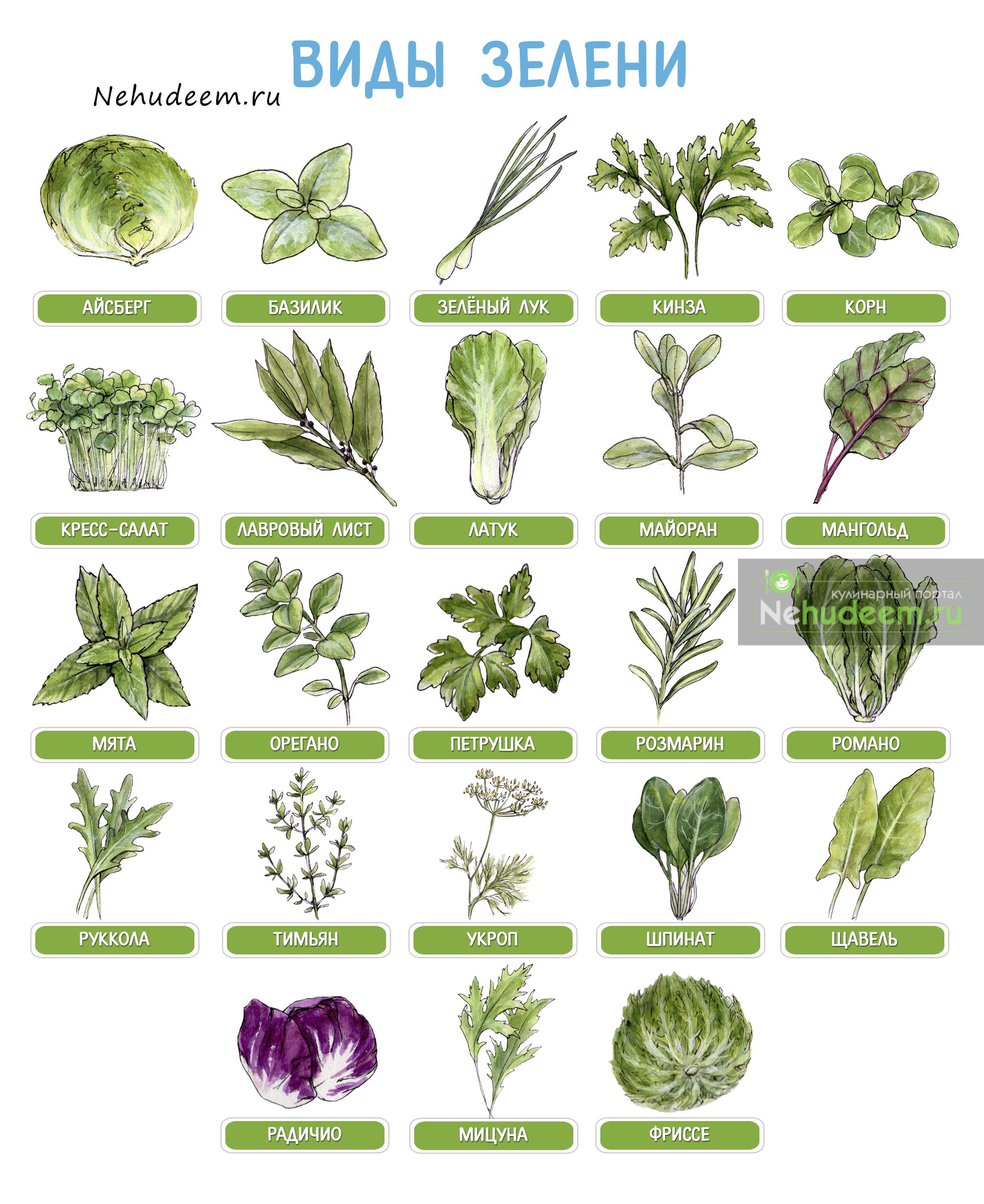 каталог пряных растений по алфавиту с картинками выбор для дачи